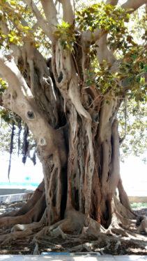 Blauer Baum bei Tag