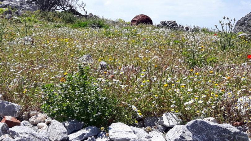 Blumenwiese auf Levitha