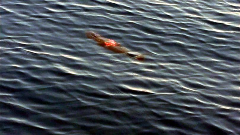 Verletzter Thunfisch