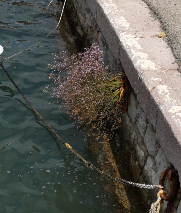 Blume an der Kaimauer