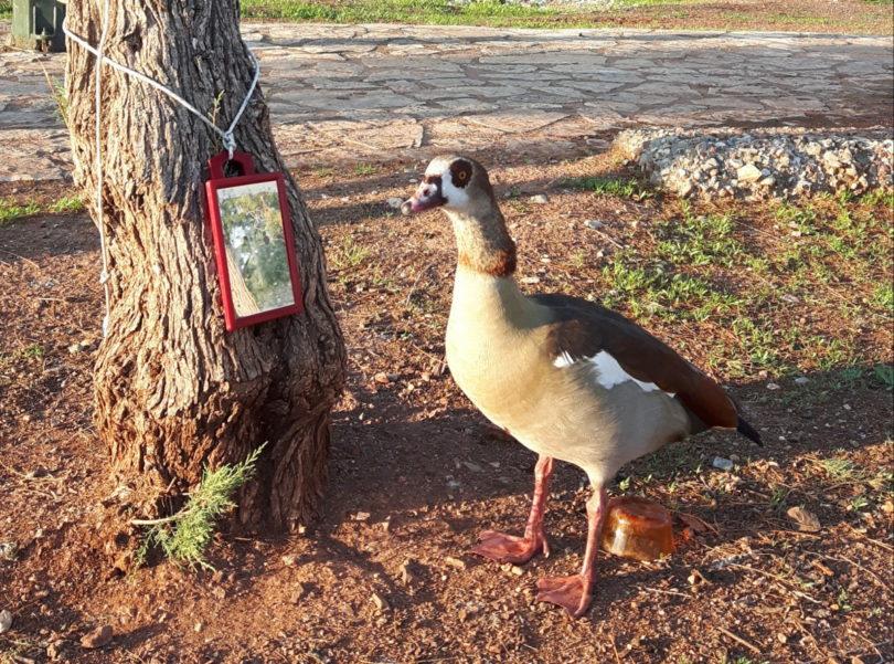 Eitle Ente in der Marina von Trizónia